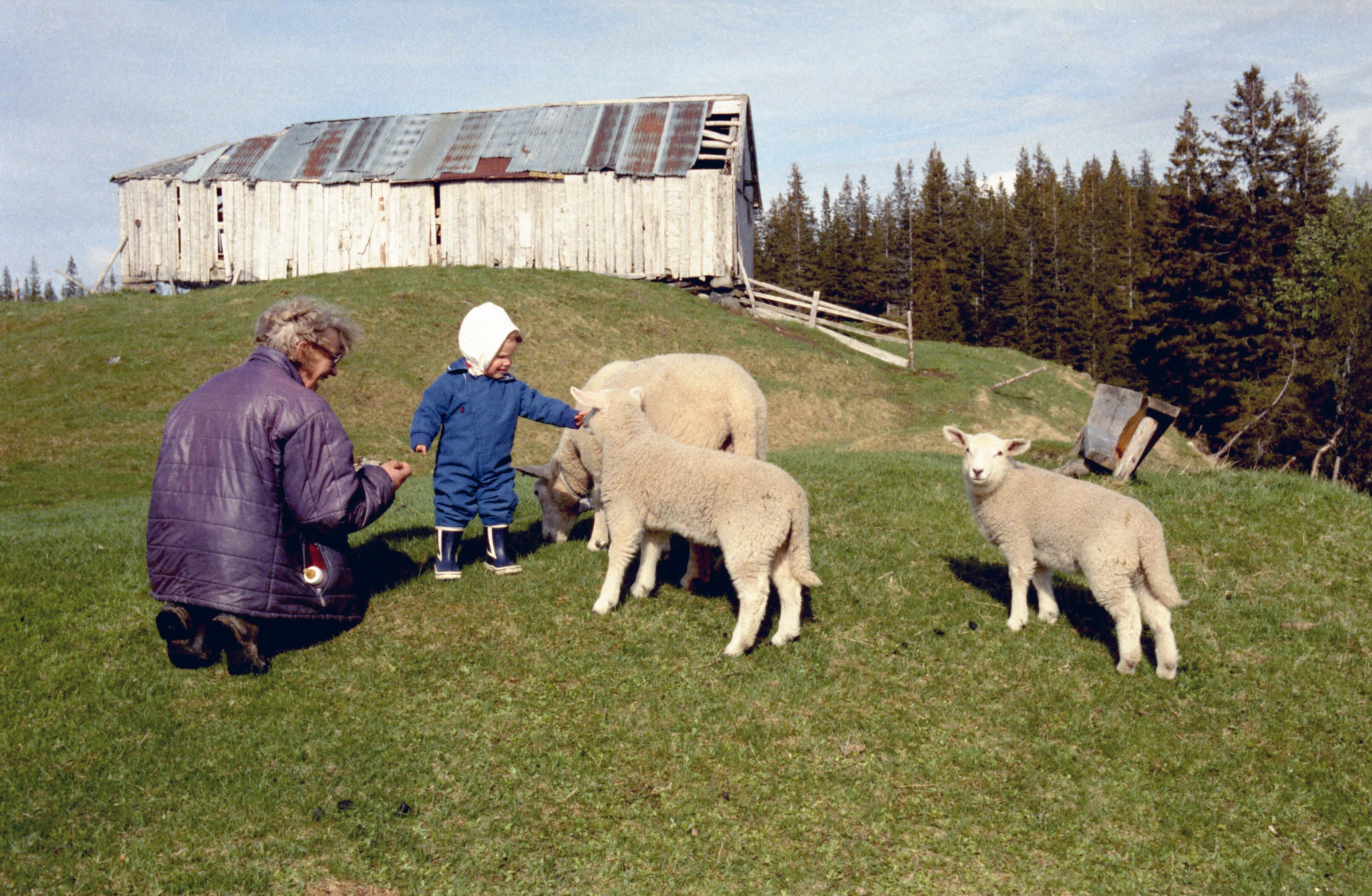 Juvassetra Tante Eva og Elise med sauene